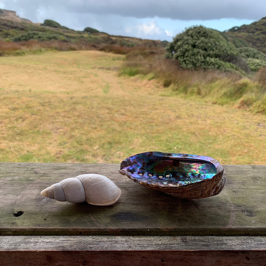 A gleaming pāua sits on a ledge next to a large marine snail shell at Twilight.