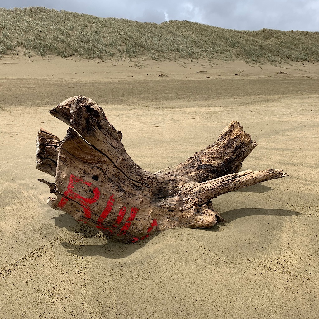Driftwood set like concrete in the sand.