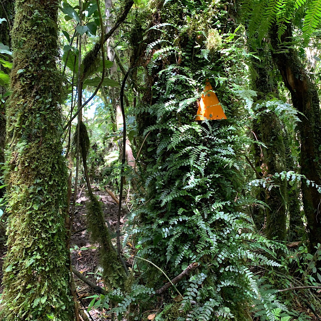 Orange triangles mark the trail through dense bush.