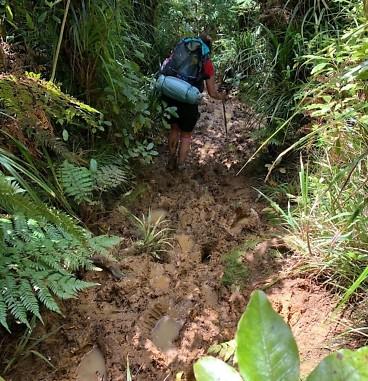 Te Araroa Day 4, Raetea Forest