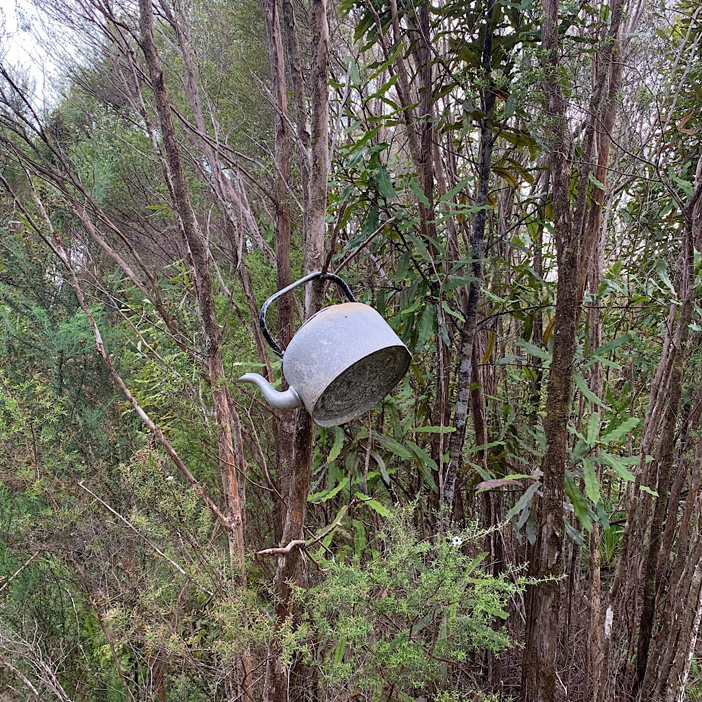 A random kettle hanging off a tree in the Raetea Forest.