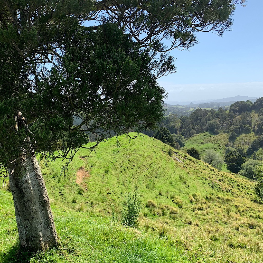 Steep, green  and verdant fields reaching towards the Pacific Ocean.