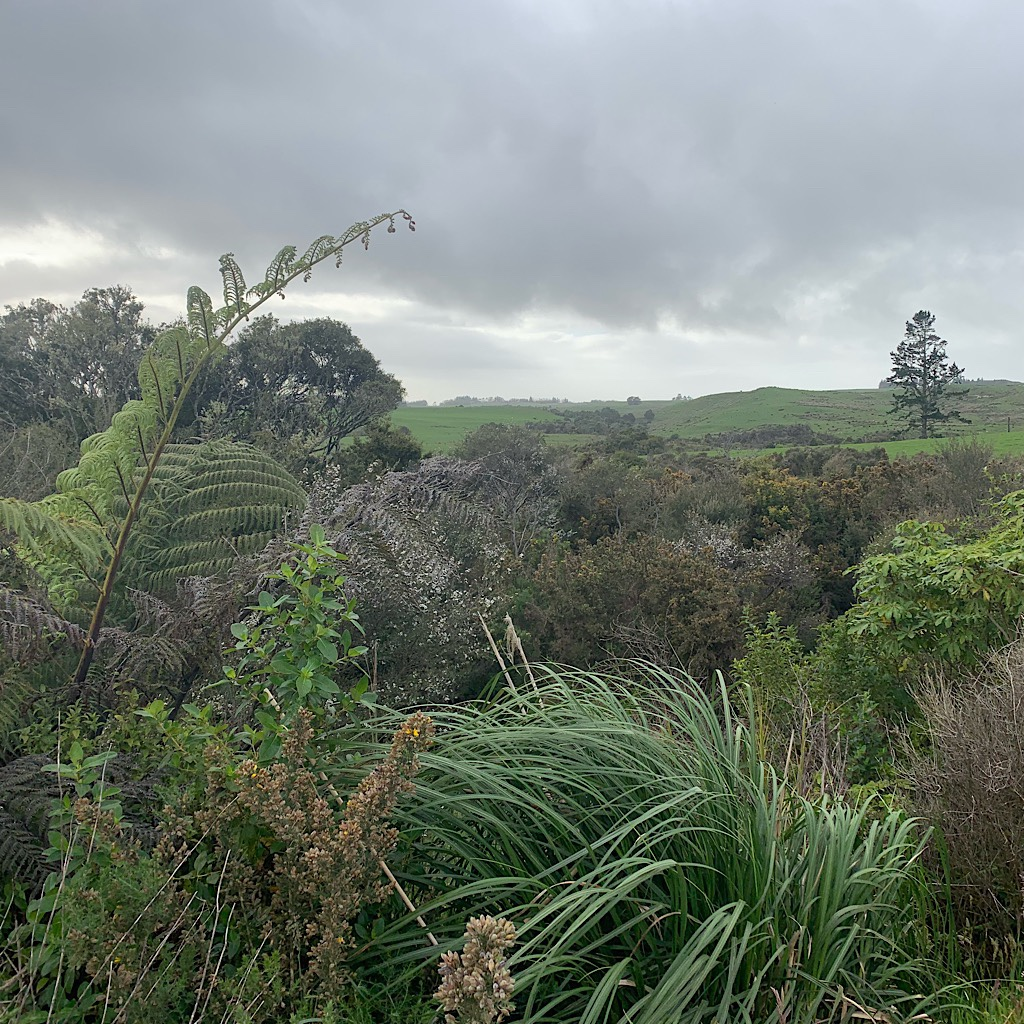 Settlers worked hard to clear the New Zealand bush for pastureland.