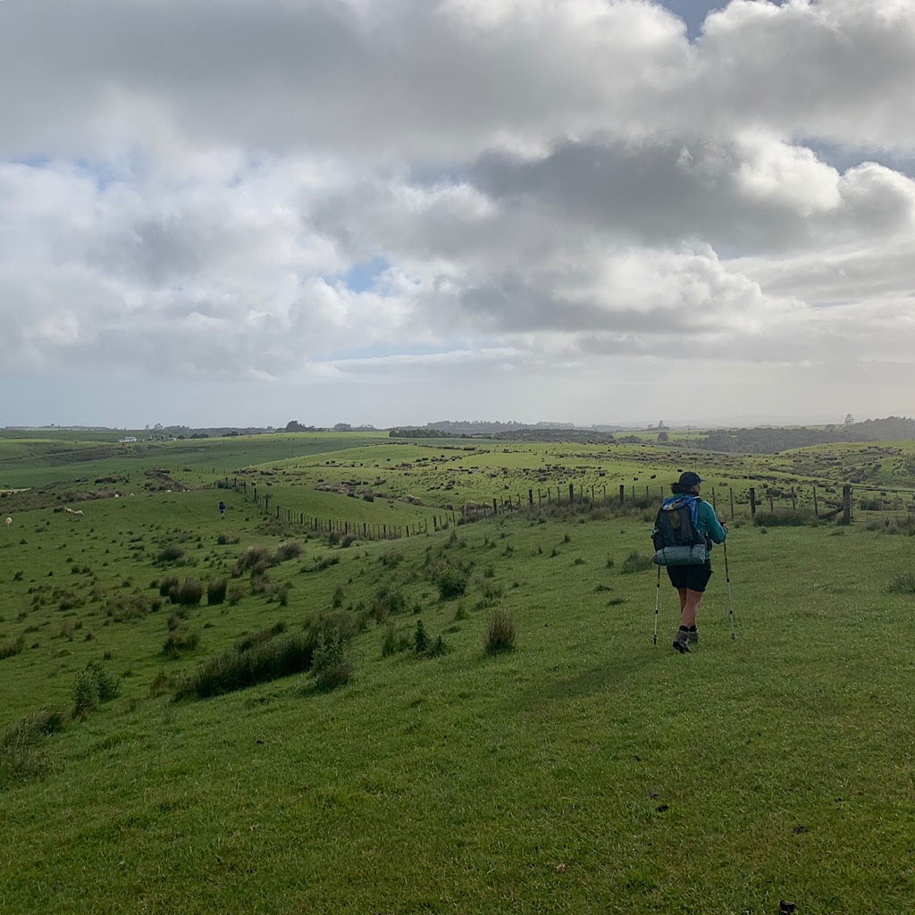 Irene moves quickly on the wide open pastureland near Kerikeri.