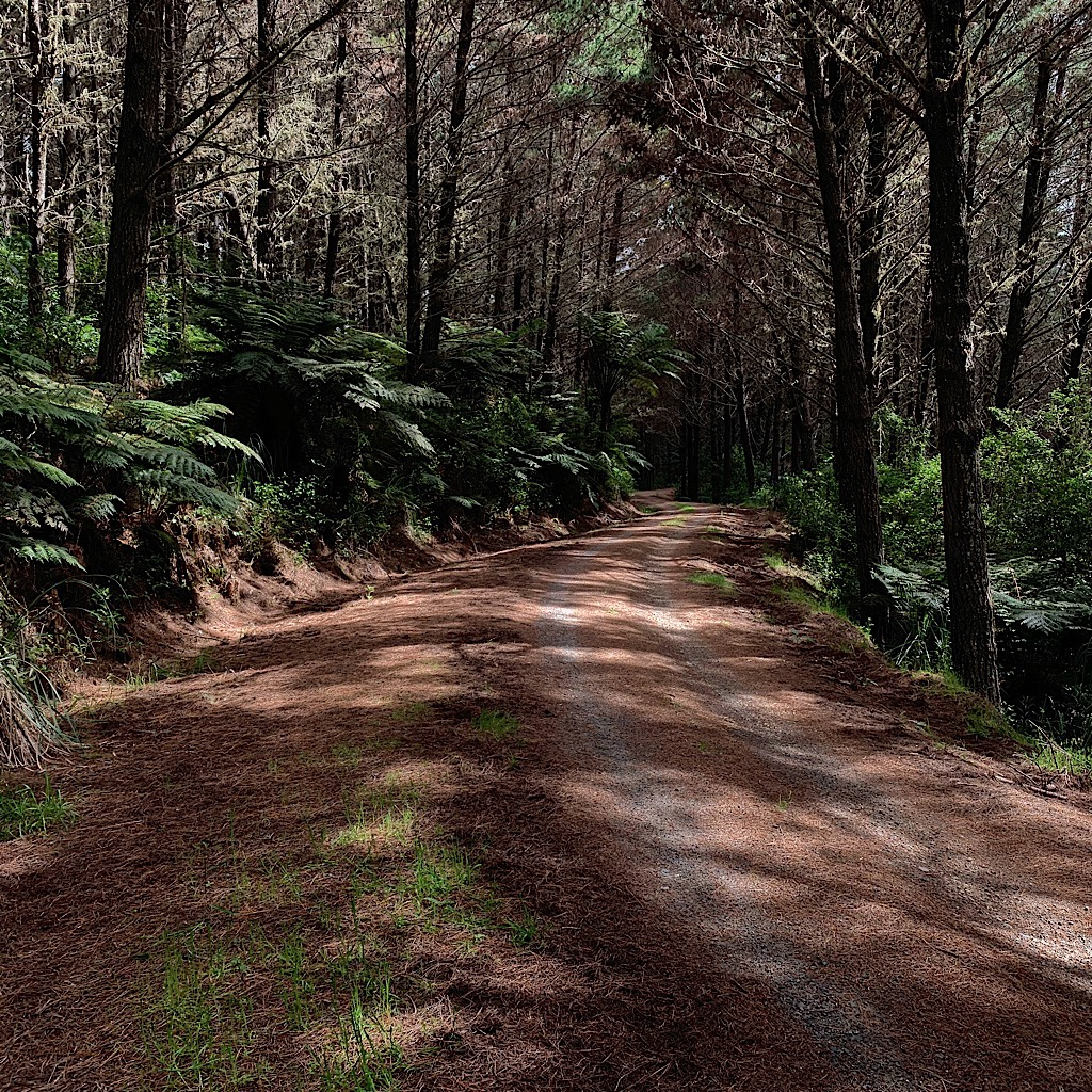 """Easy Tramping Track"" through the Waitangi Forest."
