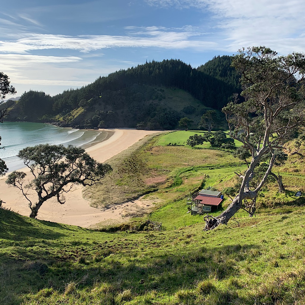 Private beaches are framed by pohutukawa on this easy tramping track.