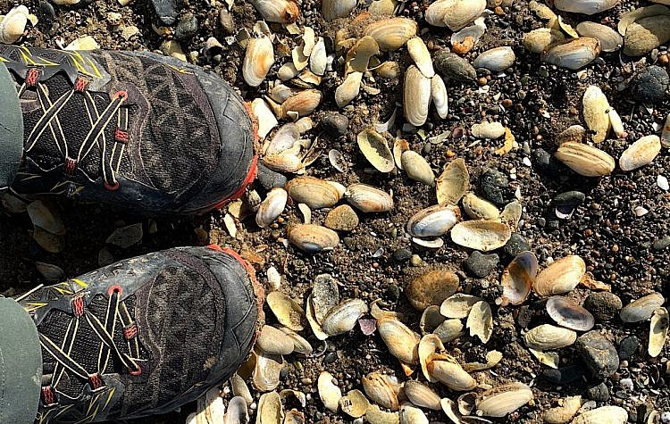 Millions of pipis and tuatuas give a lovely crunch to my step.
