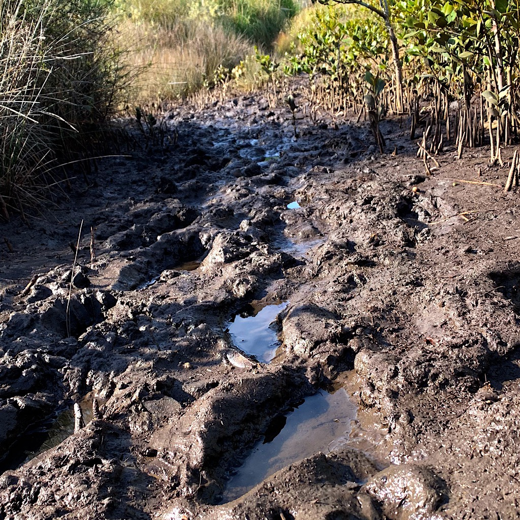 I'm never very far from mud when walking in New Zealand.