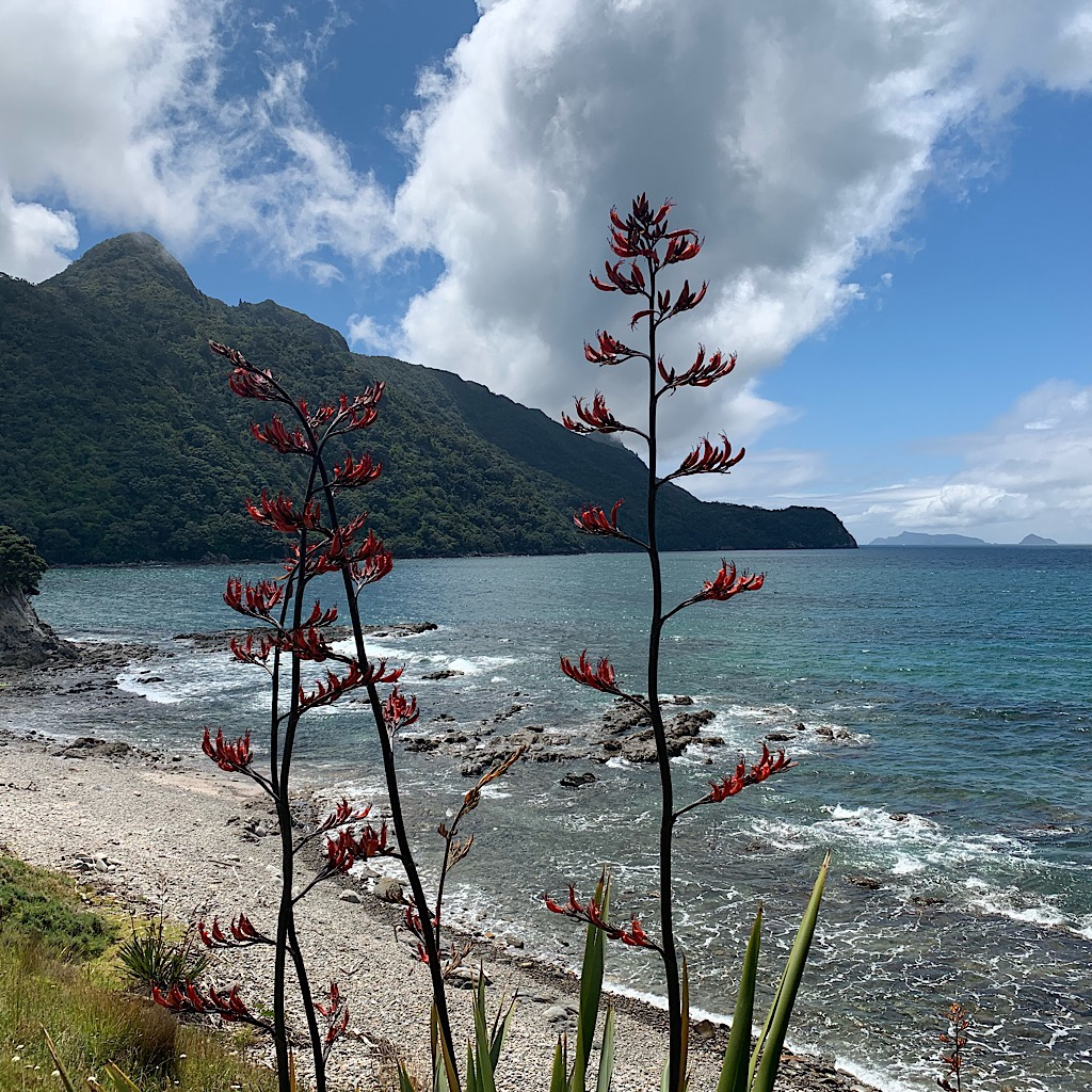 Wild flax along the Pacific Ocean with Lions Head in the background.