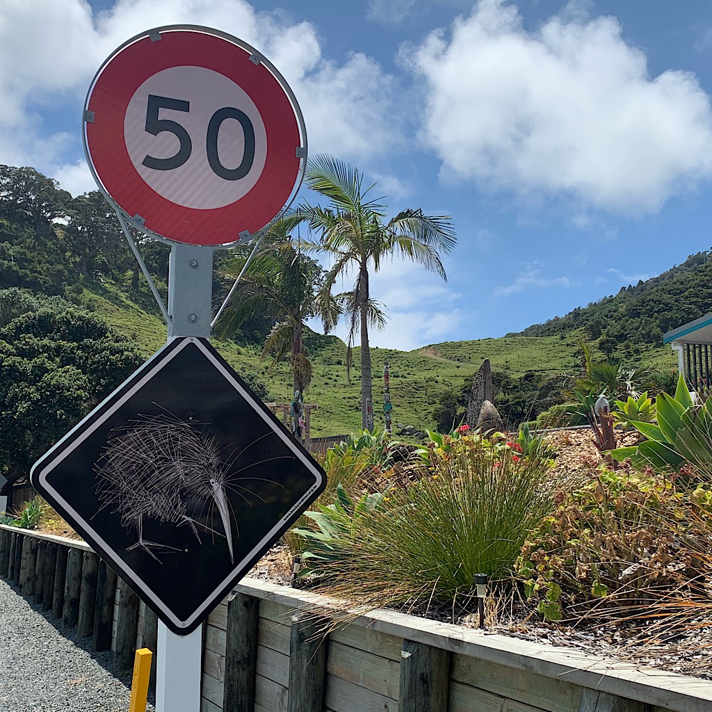 A sign warns motorists that kiwi cross here at night.
