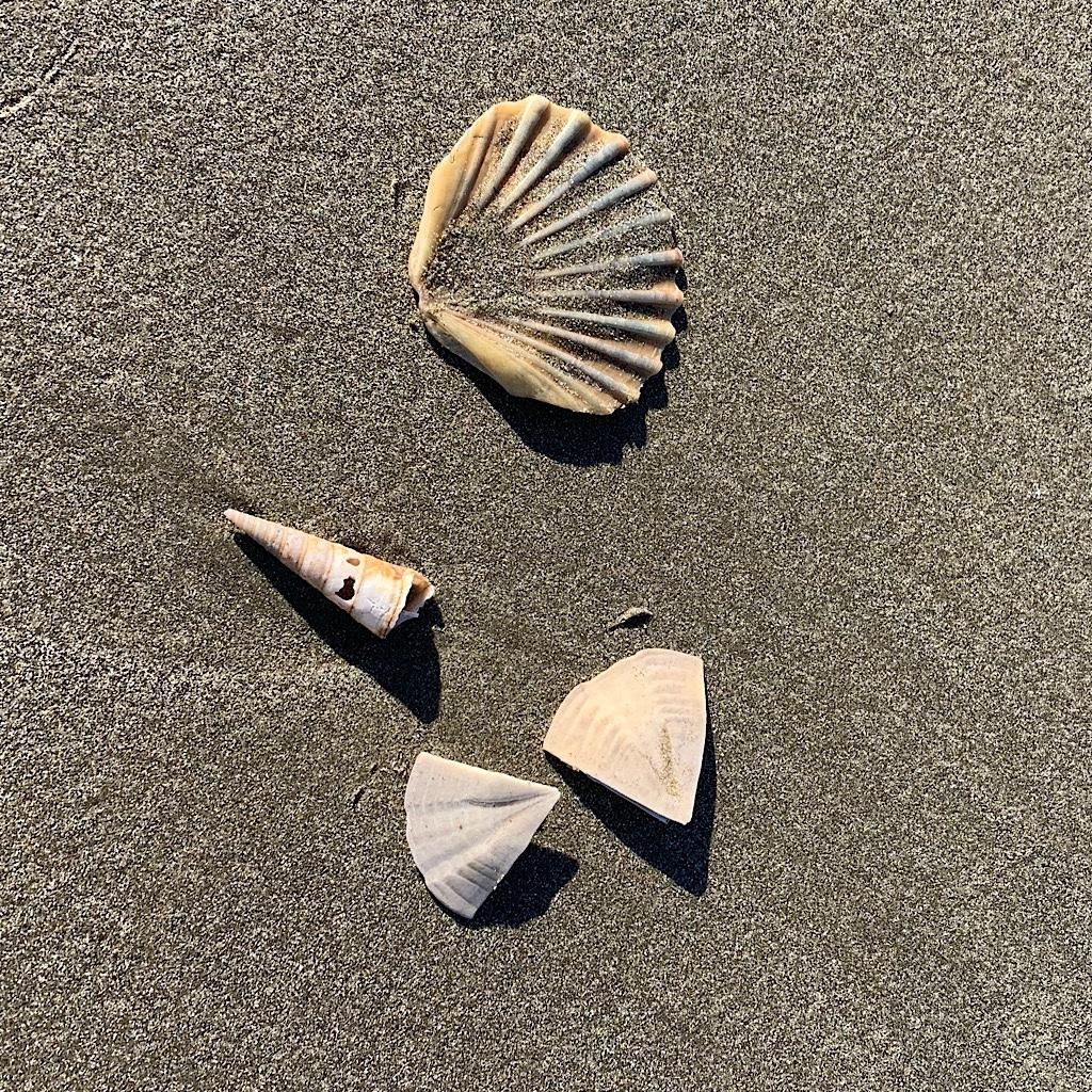 Shells crunch underfoot on the long beach walk.