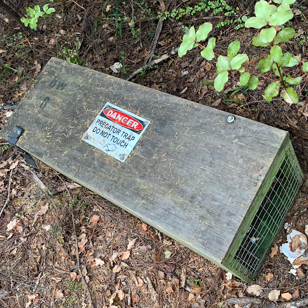 A trap for invasive predators. The New Zealand bush is near collapse due to the foolish releasing of possums into the wild.