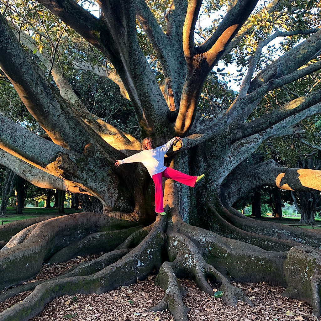 Blissful dances on a Moreton Bay Fig tree wearing borrowed cloths in Auckland's Domain.