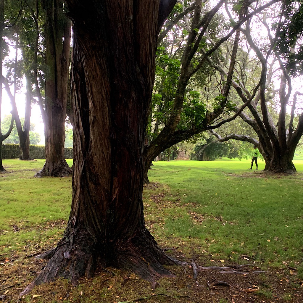 A misty walk through Cornwall Park in Auckland, but Kiwis are still out in it.
