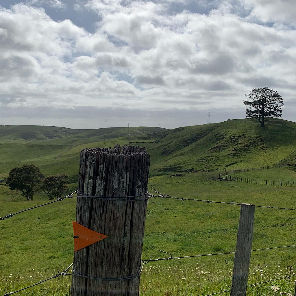 An orange triangle marks the way through farmland in the Waikato.