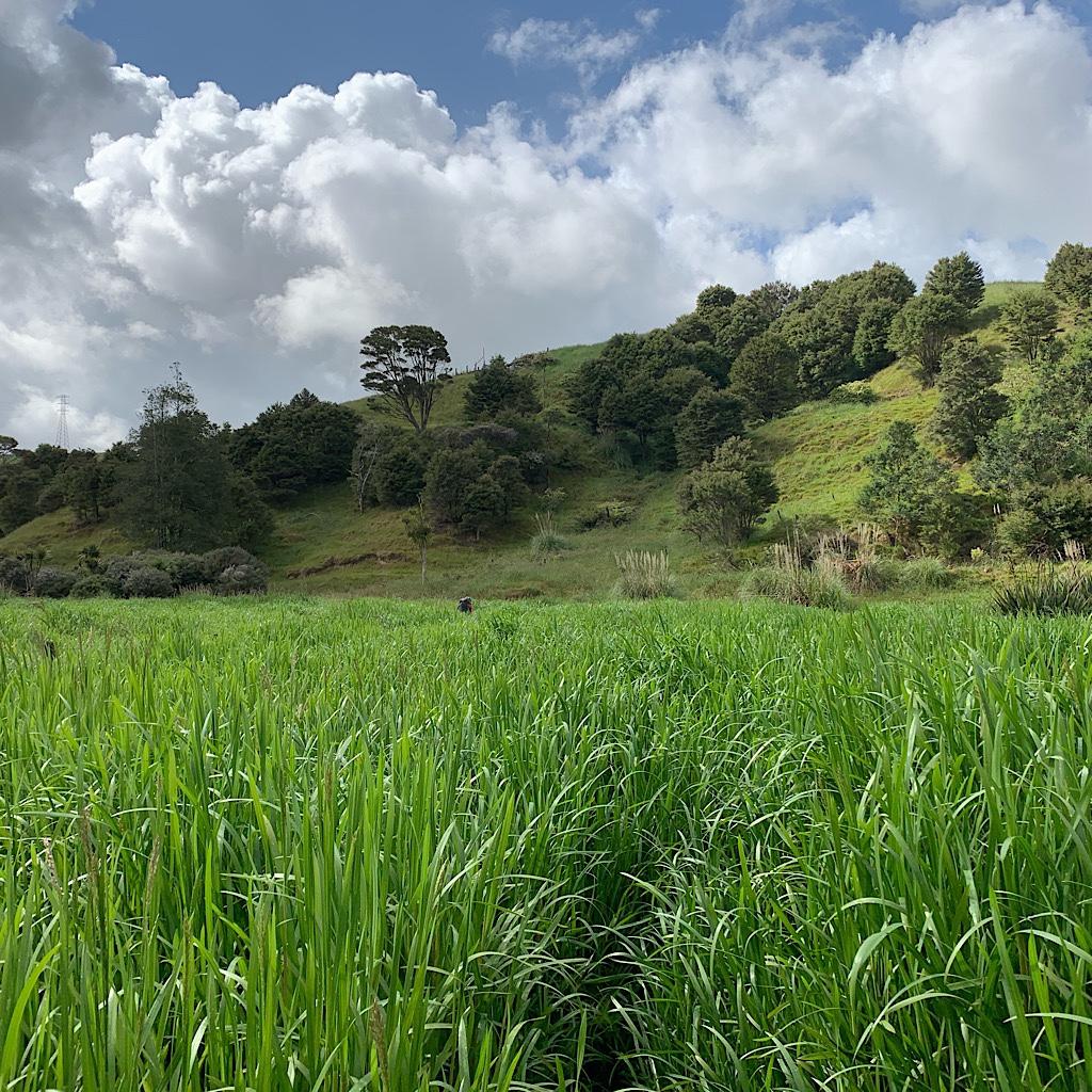 Tall grass hides deep and squishy wetlands below.