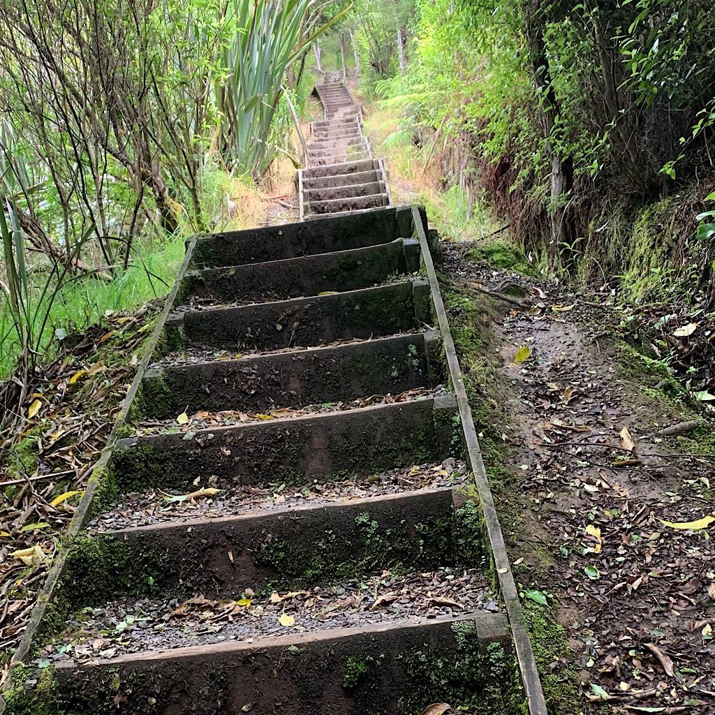 The Kauri Loop begins on stairs before entering steep and muddy bush.