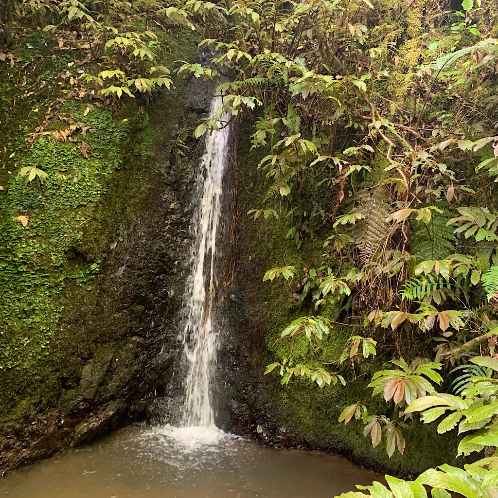 Once on the Hakamirata Waterworks Track, it's all beautiful stairs and waterfalls.