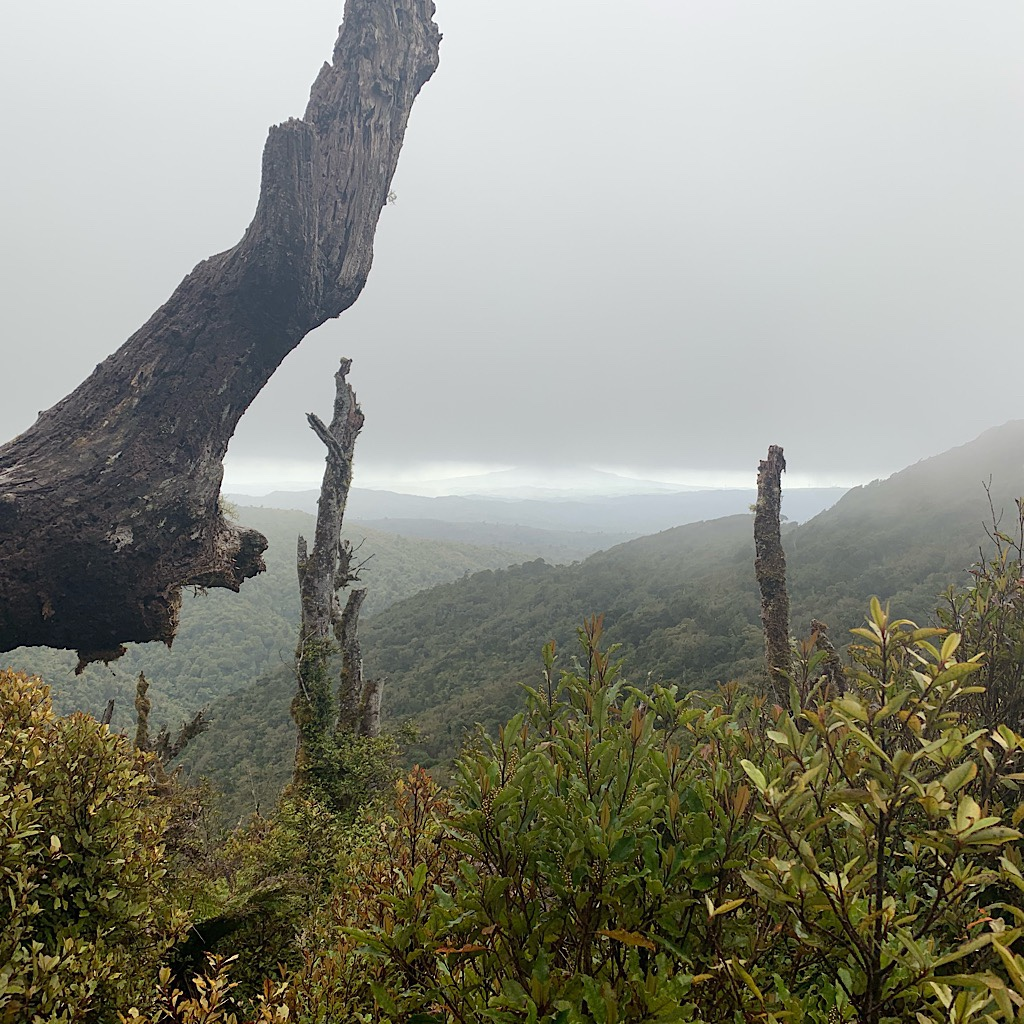 The view begins to disappear as I ascend into cloud on Mount Pirongia.