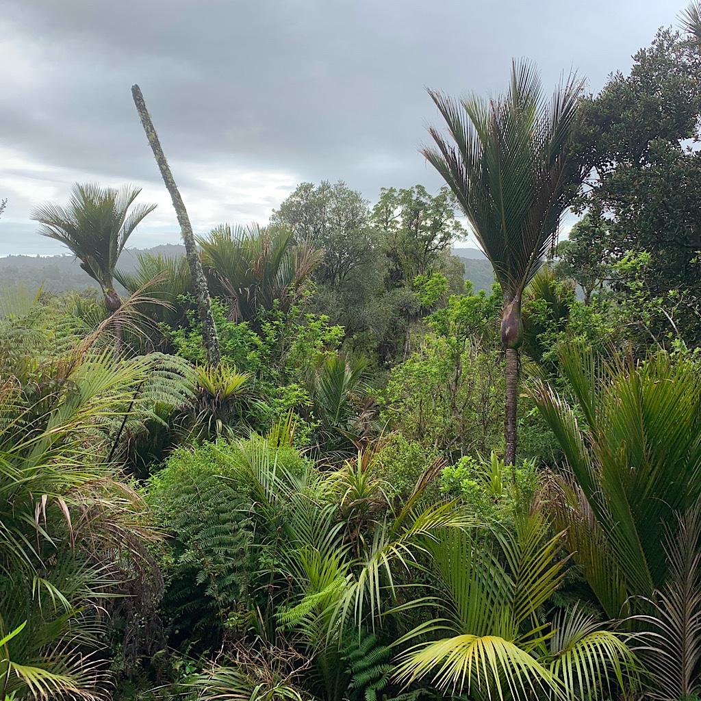 New Zealand bush.