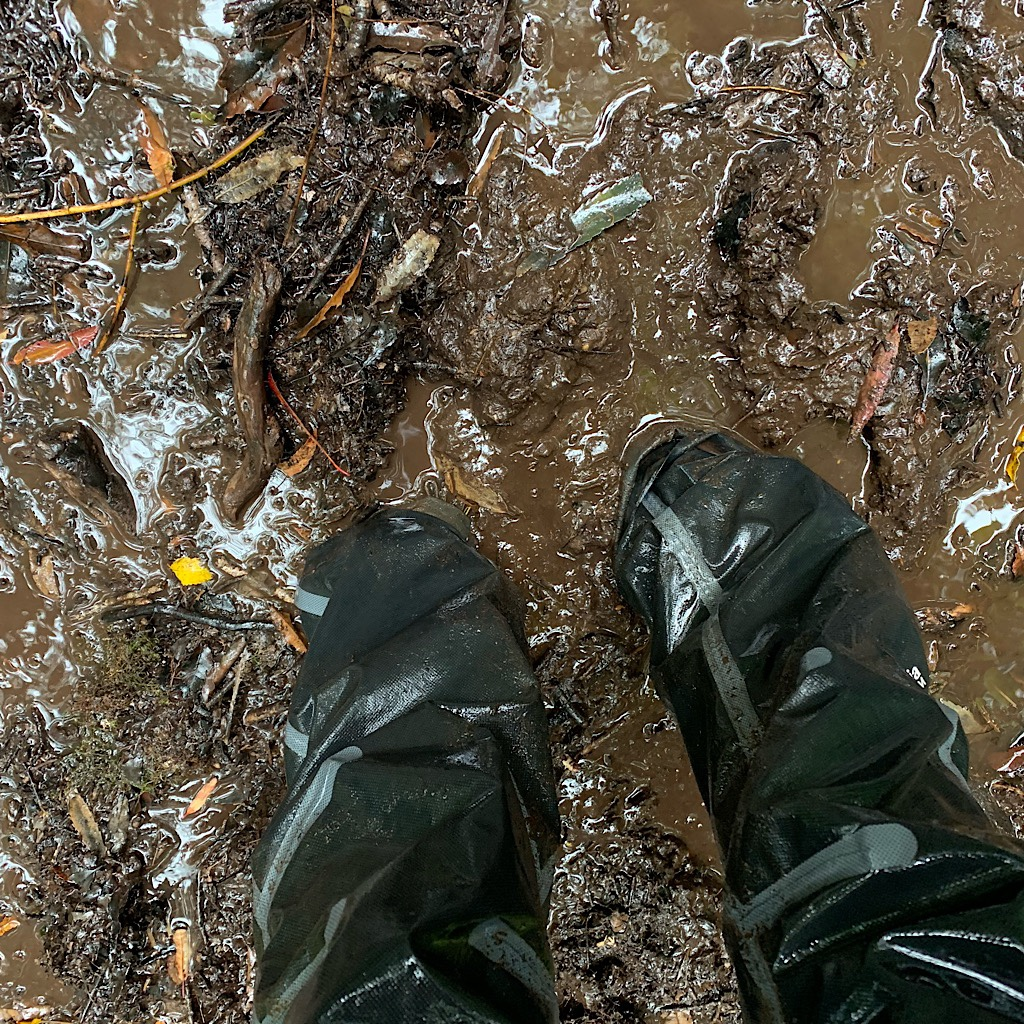 The mud was up to my ankles on Mount Pirongia.