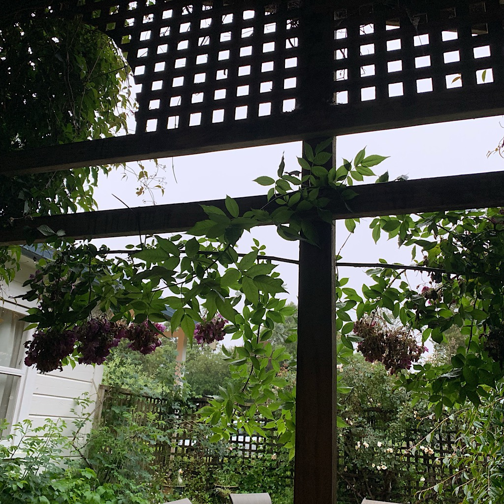 Wisteria on the trellis at Jon's B&B. He invited us to take the spare rooms when the rain wouldn't let up.