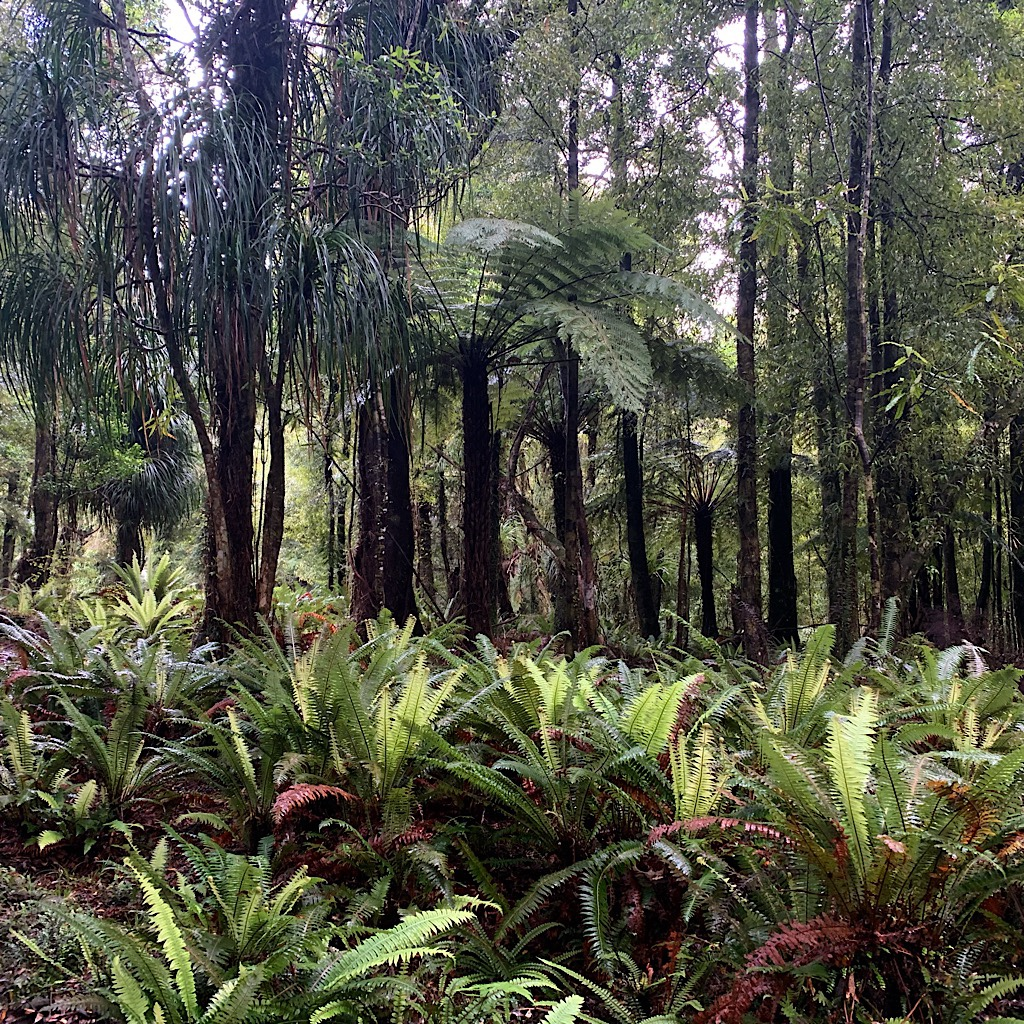 Tree ferns and Nikau Palm block out the light.