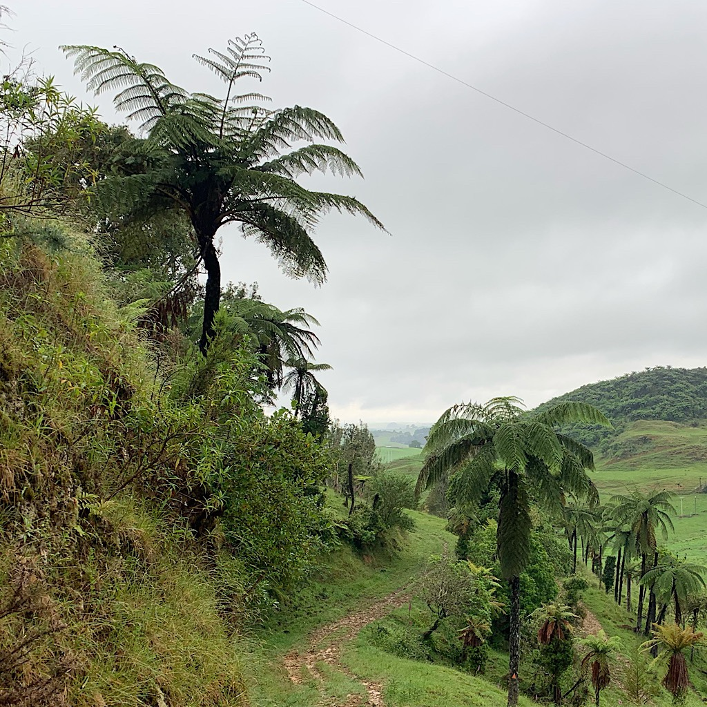 King Country's Pehitawa Track is mostly easy walking over farmland and regenerating bush.