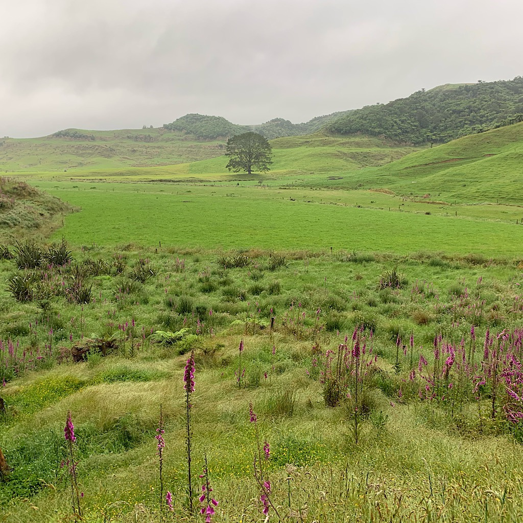 It misted all day on the walk from Waitomo to Te Kuiti.