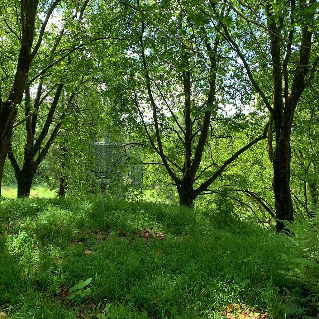 A disc golf basket in Brook Park Reserve near Te Kuiti.
