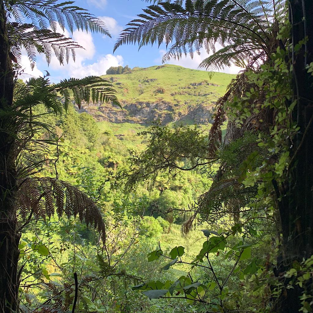 Views through tree ferns towards the limestone hills surrounding the Mangaokewa river.