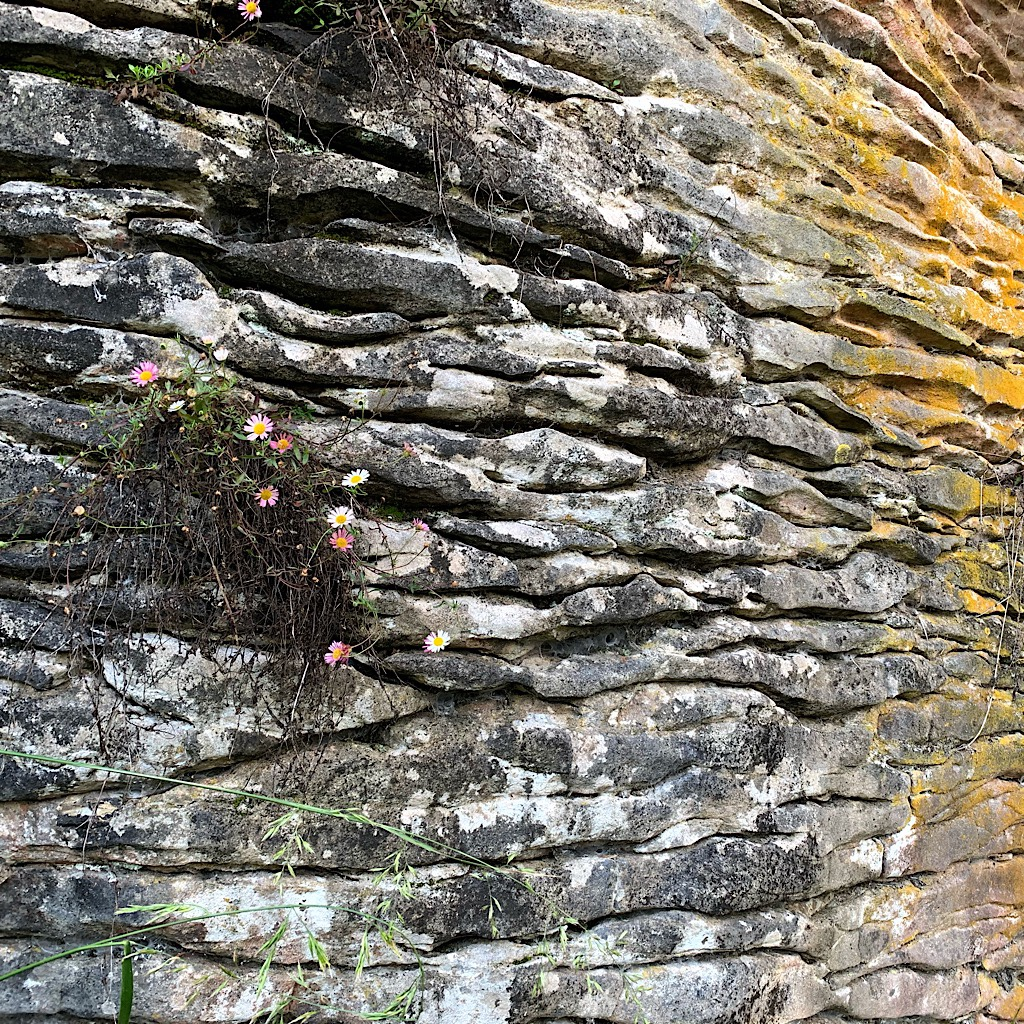 Opportunistic plants work their way into the cracks in the limestone cliffs.