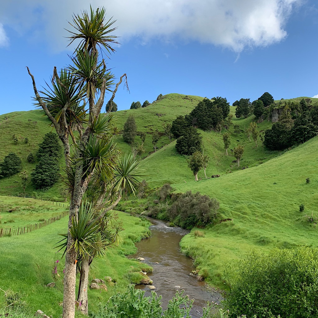 The beautiful bright green hills of King Country with cabbage tree and the Mangaokewa River.