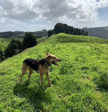 Te Araroa Day 38, Mangaokewa Reserve