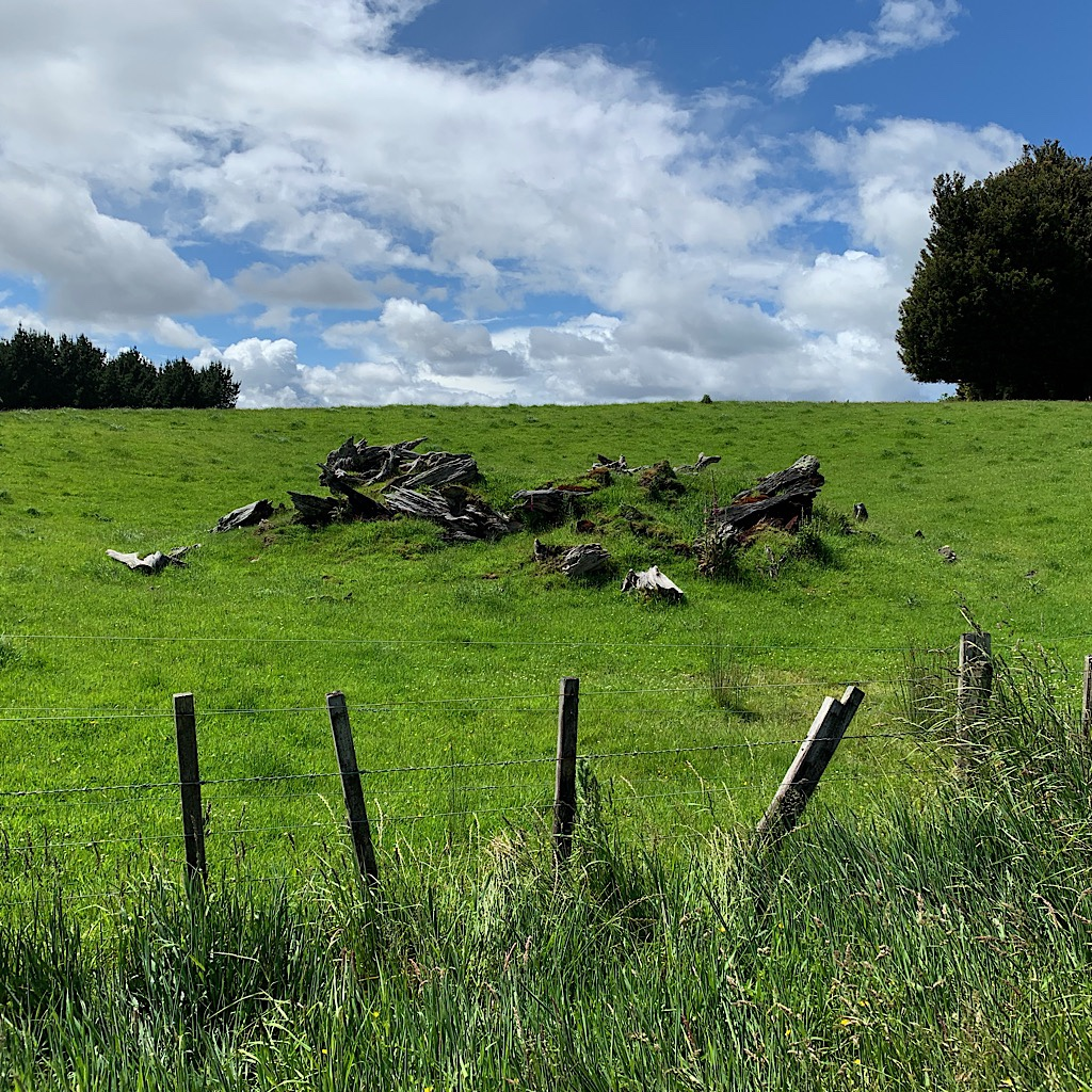 A disintegrating pile of wood offers interest in this long stretch of farmland.