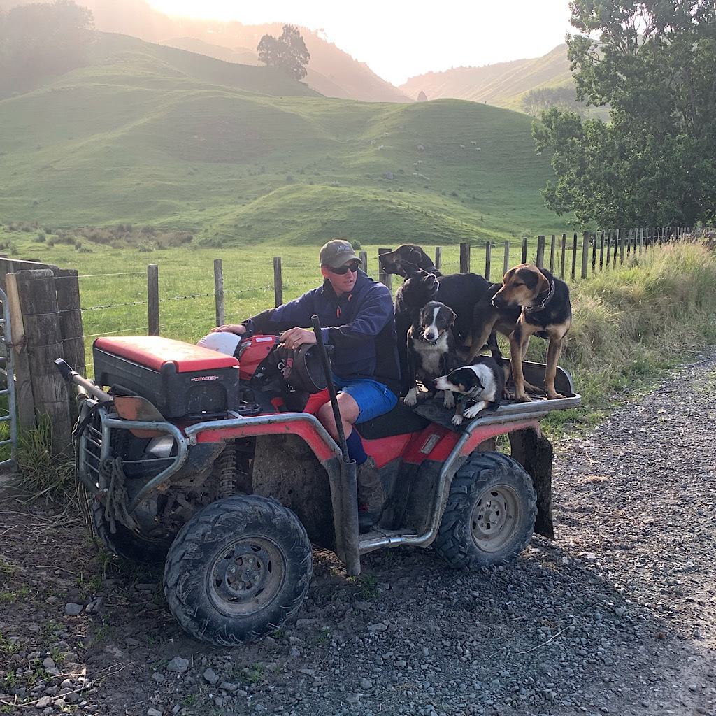 Working dogs pile onto the 4x4 for to head into the pastures.