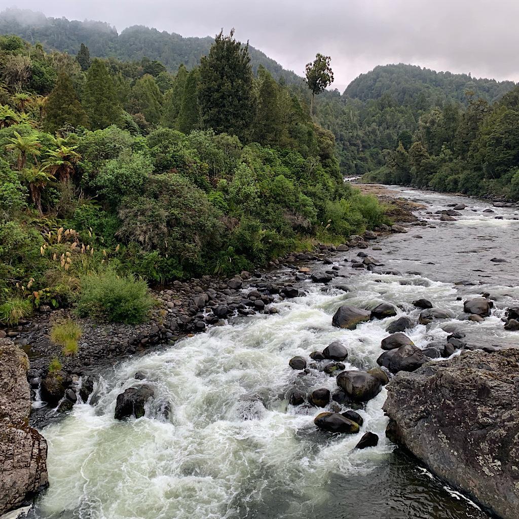 Rapids on the Whakapapa where whio – or blue ducks – hunt for fish.