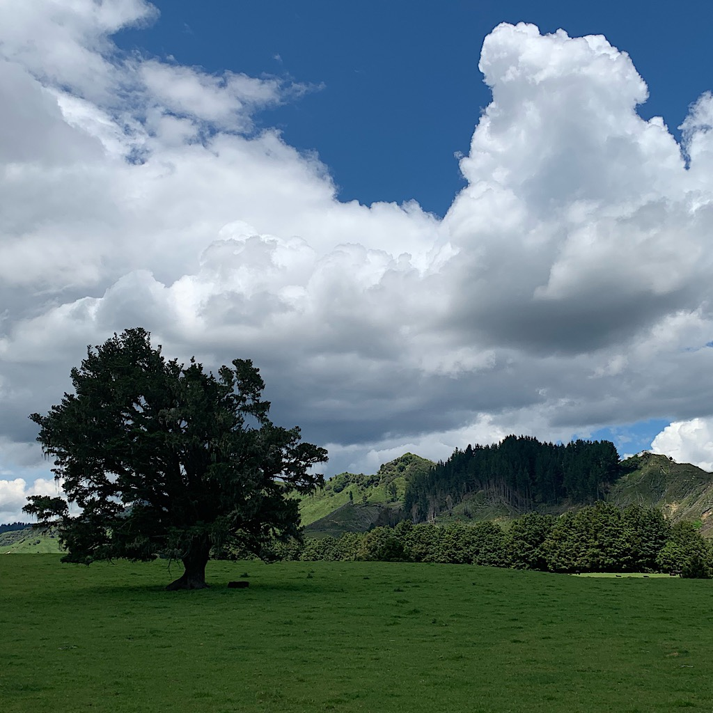 A typical view in new Zealand of verdant green and huge cumulus clouds.
