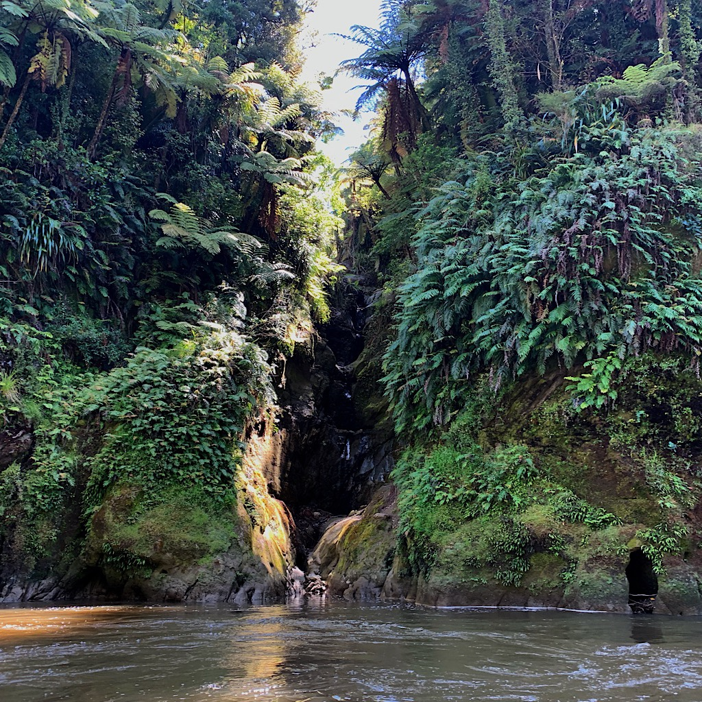 One of thousands of secret streams joining the Whanganui.