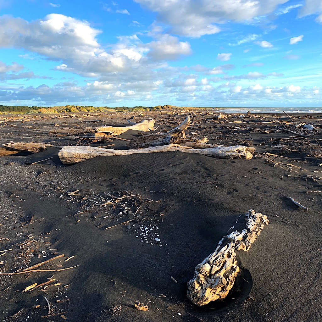 The beach was covered in drift logs, likely brought to the sea from the bush down the Whanganui then washed to shore.