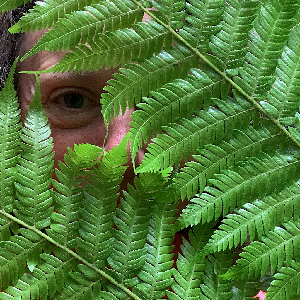 Fern face at Mount Less Reserve.
