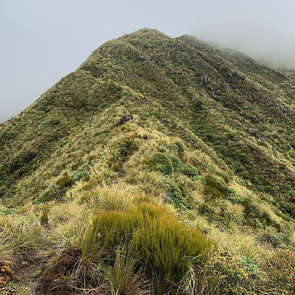 Descending Pukematawai, I followed the ridge line for nearly four hours before reaching the hut. It was one of the most magical experiences of the entire trail.