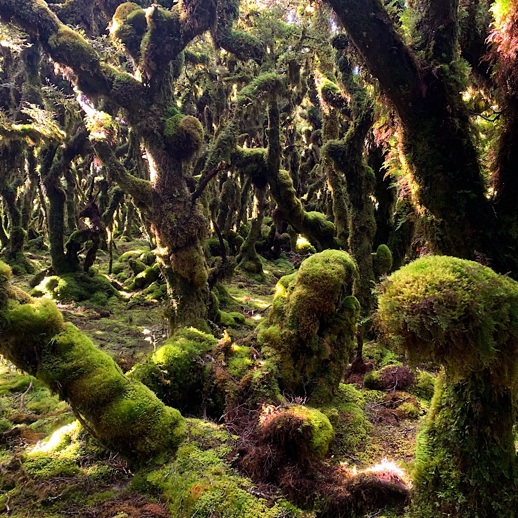 A goblin forest in the Tararua.