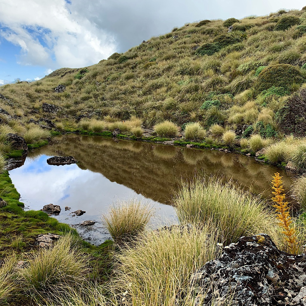 A tiny tarn where I filtered the last bit of water for the huge descent to Waitewaewae Hut. I was glad I did, because it was a doozy!