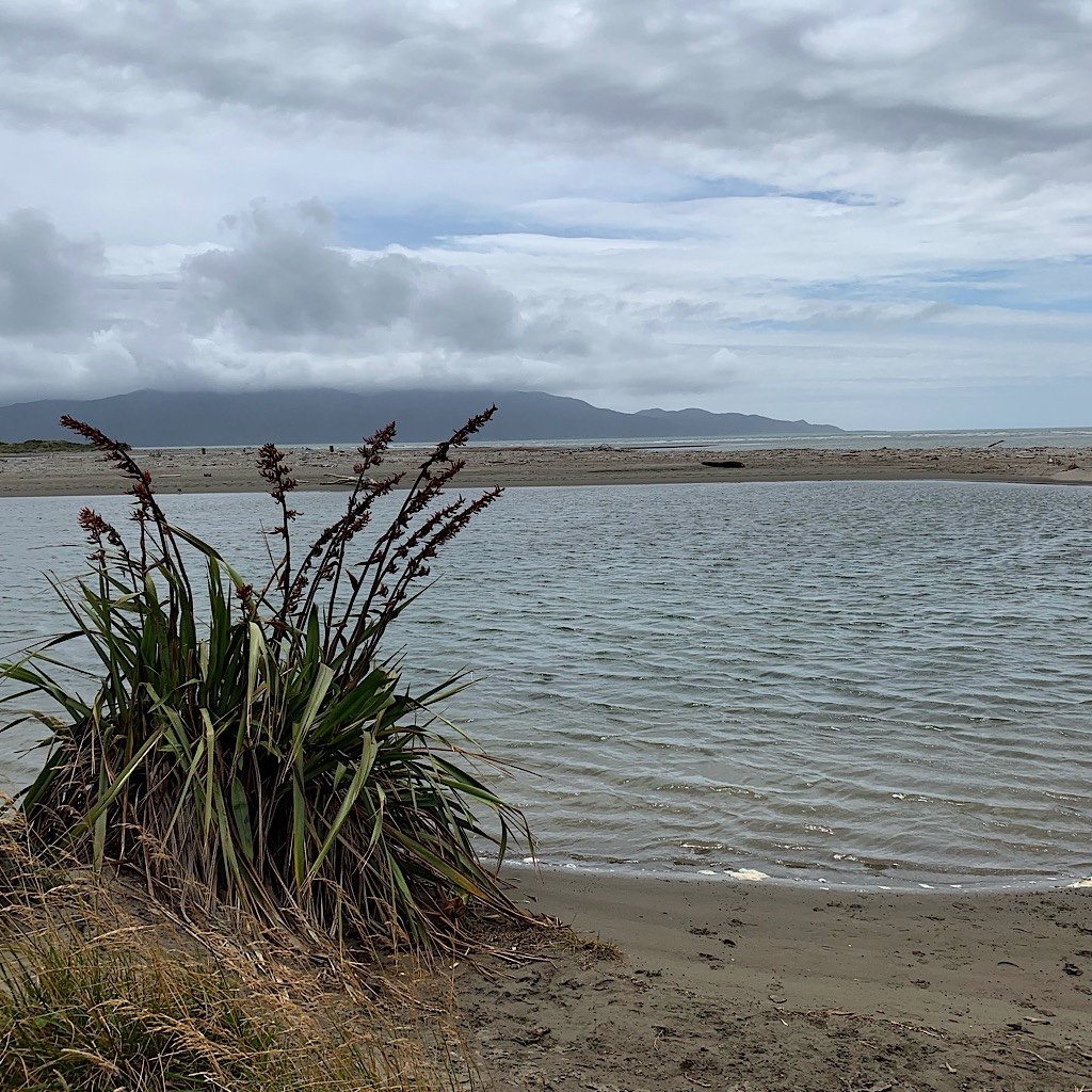 Flax on the edge of the estuary with the the Kapiti Coast and the escarpment in the distance.