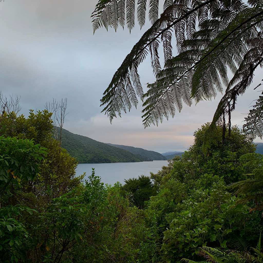 A tree fern and sunset along the Queen Charlotte Track.