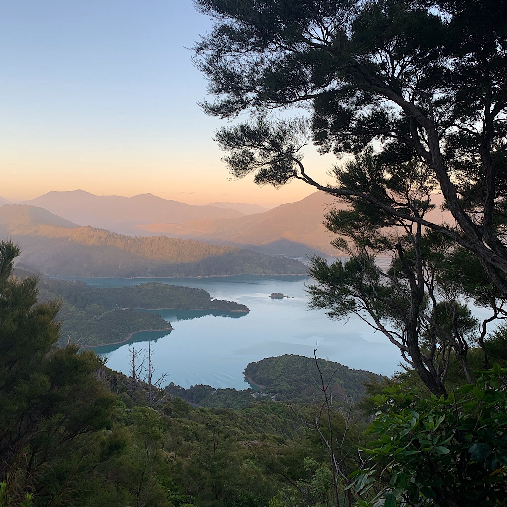 Sunrise on Pelorus Sound, the air fresh and chilly.