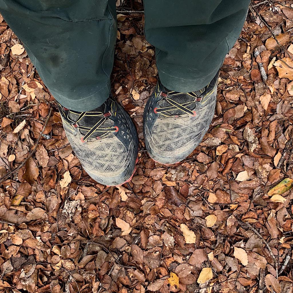 The carpet of beech leaves.