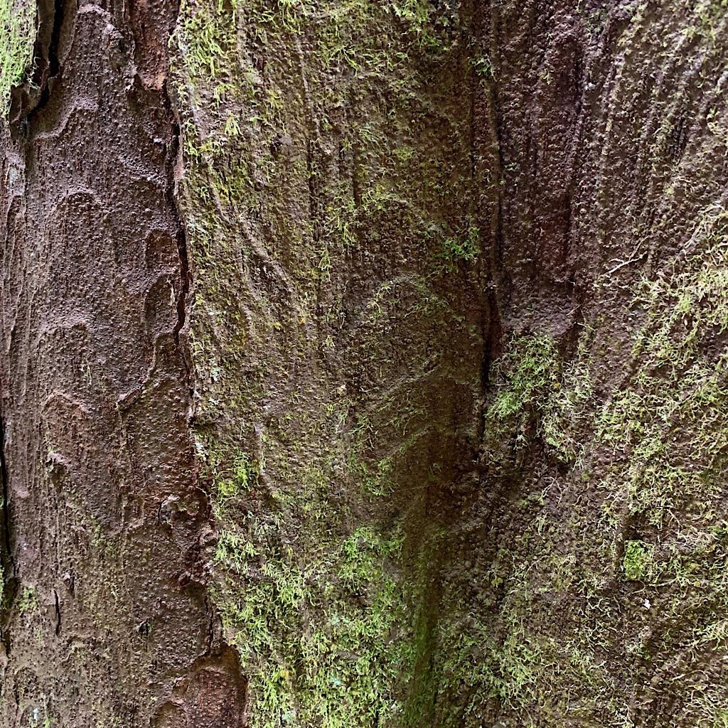 Moss and bark abstract.