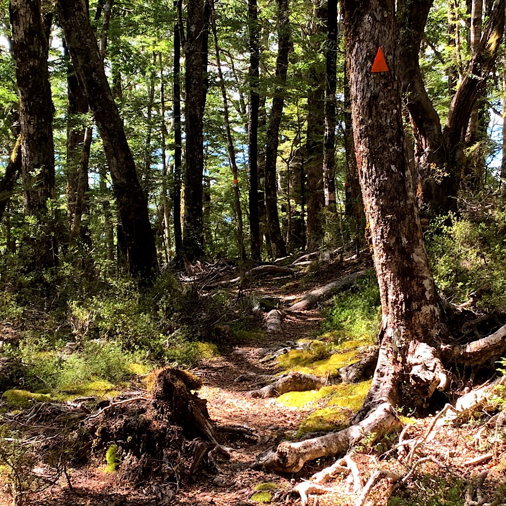 The orange triangle points the way through a hobbit-like magical forest.